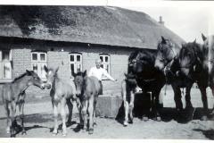Soeren-Praest-paa-Staevnbakgaard